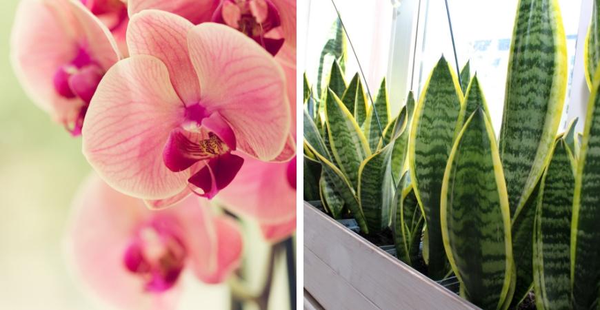 Kamerplanten kopen bij Tuincentrum Coppelmans