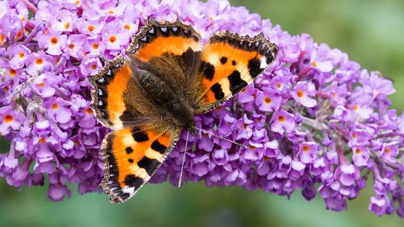 Tuincentrum Coppelmans | Natuurlijk tuinieren