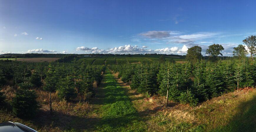 Kerstbomen koopt u bij tuincentrum Coppelmans