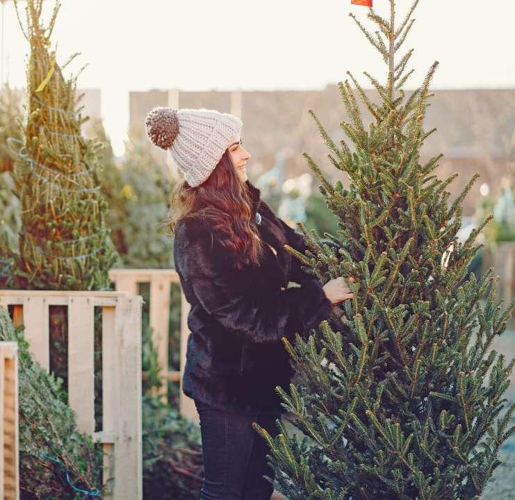 Tuincentrum Coppelmans   Kerstboom kopen