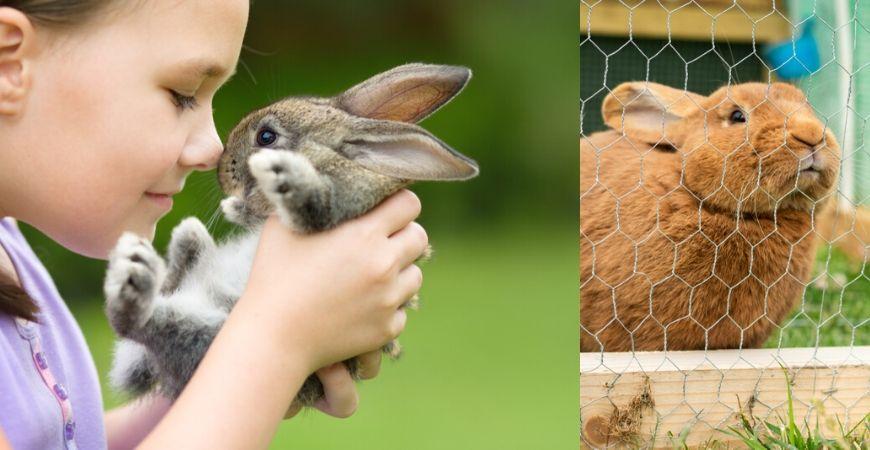 konijnen-kopen