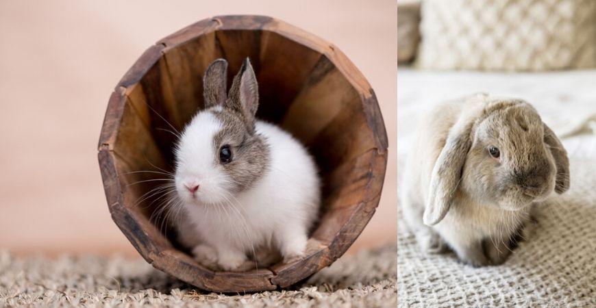 konijnen-coppelmans
