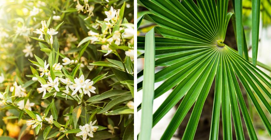 Tuincentrum Coppelmans | Mediterrane planten