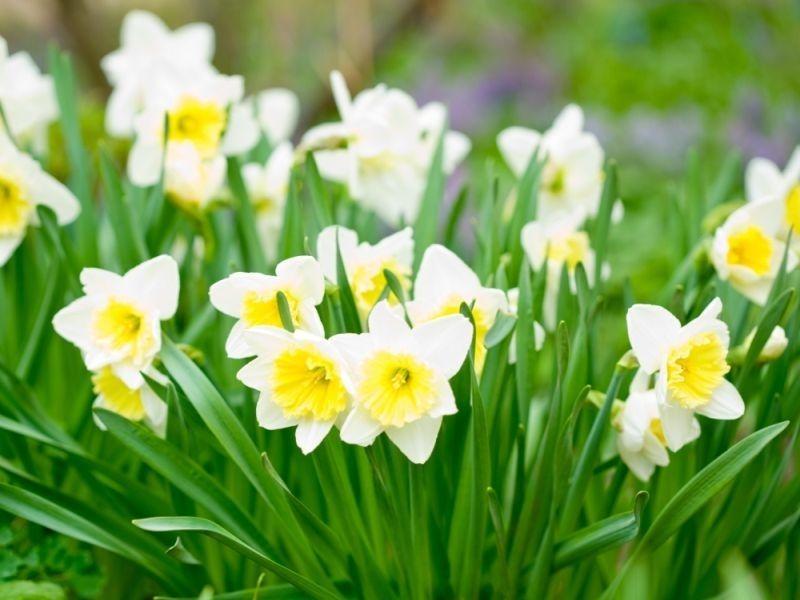 Bollen Bloeiend Voorjaar : Haal het voorjaar in huis nieuws tuincentrum coppelmans