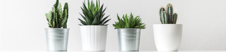 Bij Tuincentrum Coppelmans koopt u diverse soorten kamerplanten