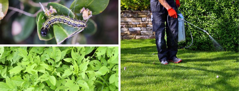 Tuincentrum Coppelmans | Tips voor gebruik gewasbeschermingsmiddelen