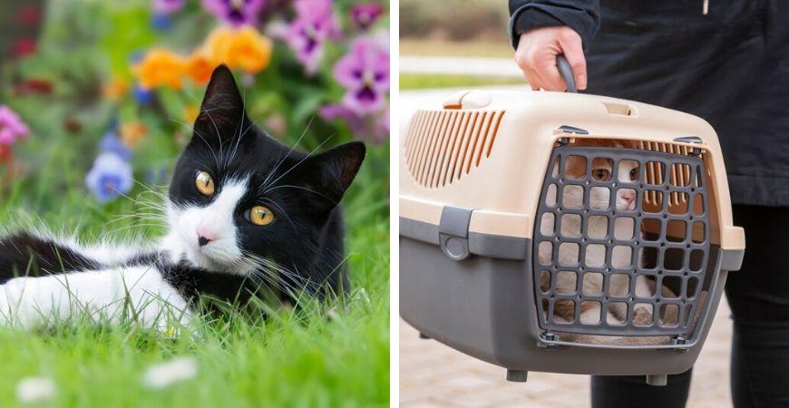 Tuincentrum Coppelmans | Dierenwinkel | Dierenafdeling | Katten