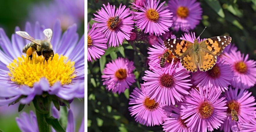 Tuincentrum Coppelmans | Dieren in de tuin | Vlinders | Vogels | Bijen