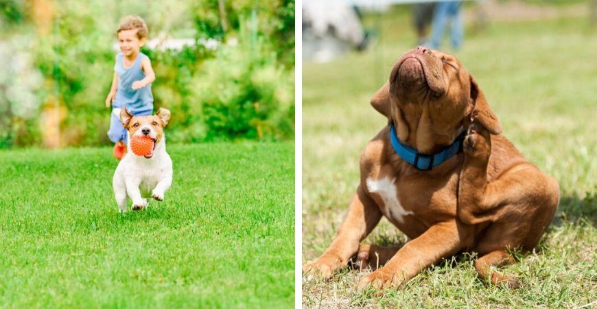 Tuincentrum Coppelmans | Dierenwinkel | Dierenafdeling | Honden