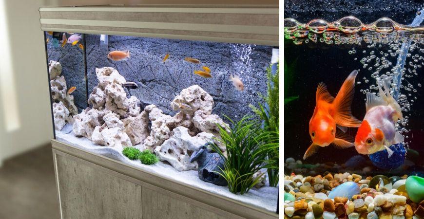 Tuincentrum Coppelmans | Dierenwinkel | Vissen | Vissenvoer | Aquarium
