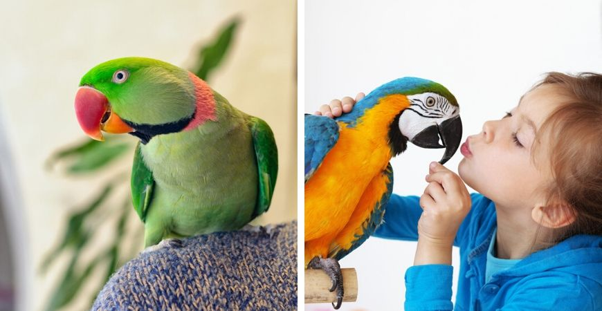 Tuincentrum Coppelmans | Dierenwinkel | Vogels