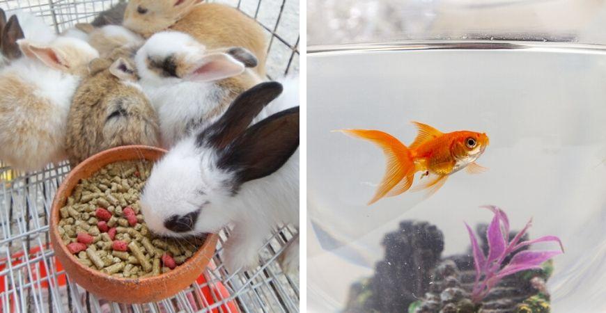 Tuincentrum Coppelmans | Dierenwinkel | Huisdieren