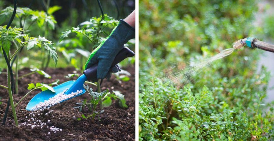 Tuincentrum Coppelmans | Gewasbescherming | Bestrijdingsmiddelen