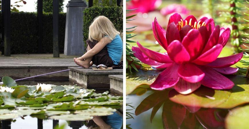 Tuincentrum Coppelmans | Vijver | Velda