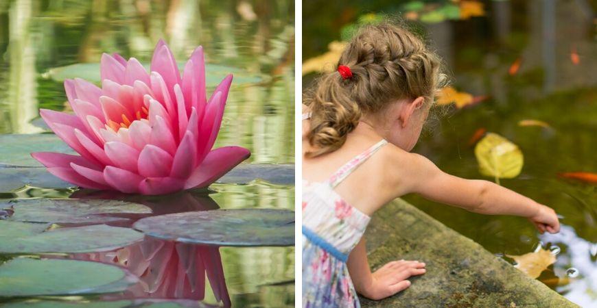 Tuincentrum Coppelmans | Vijvers | Velda