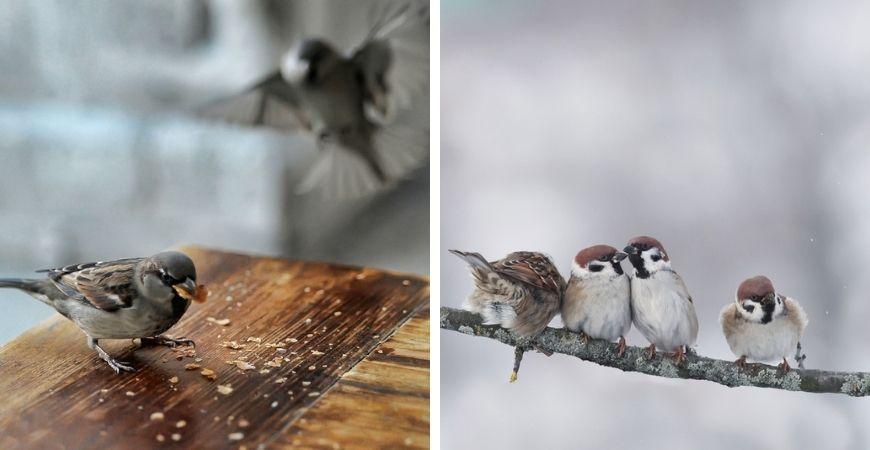 dieren-winter-tuin